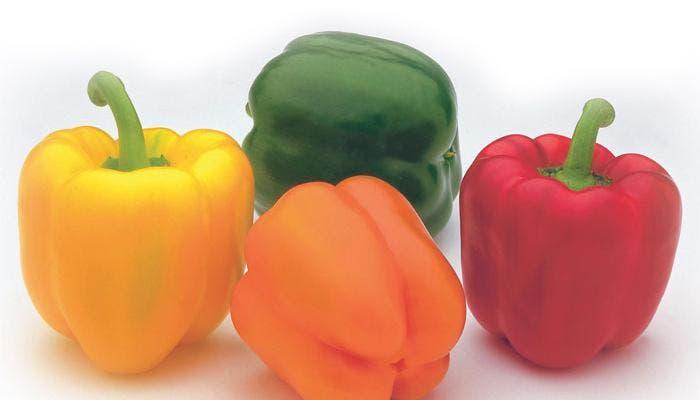 Cuatro tipos diferentes de pimientos, rojo, verde,amarillo y naranja