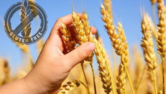 Mano sosteniendo trigo, con logotipo sin gluten