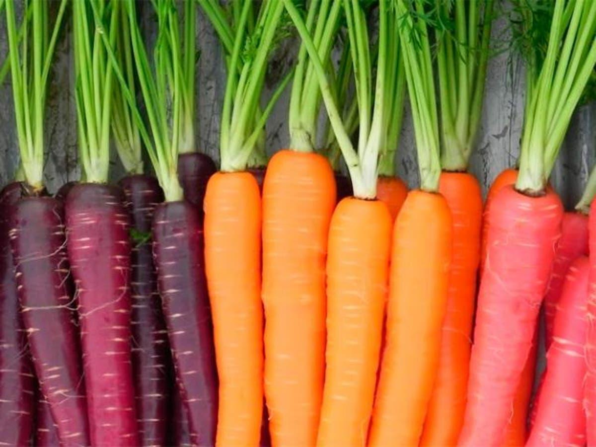 Zanahorias Sus Caracteristicas Y Propiedades Mortero más grande del mundo. zanahorias sus caracteristicas y