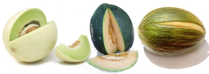 Melones variedad honeydew, tendral y Rochet