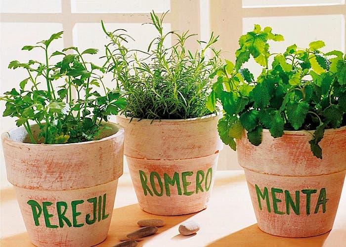 Como enriquecer un plato como darle sabor a un plato - Plantas aromaticas en casa ...